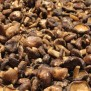 Champignon Chips - Elbnuts Markthal